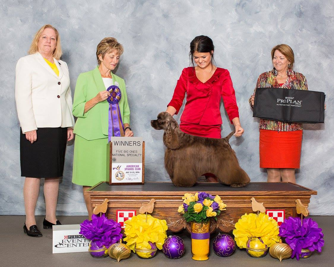Jury's Win at American Spaniel CLub show July 23, 2016